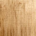 eastern-white-pine2-1